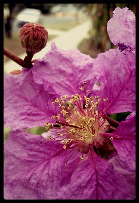 25-365 Flowers Sadliers Crossing, QLD
