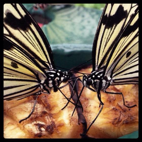 42-365Feeding butterflies. Otago Museum, Dunedin.